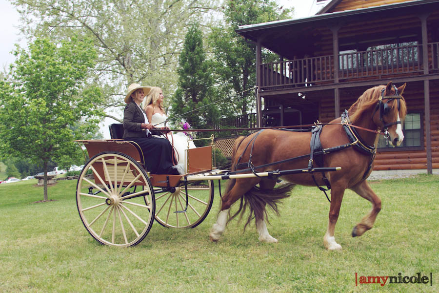 Fairytale horse and carriage wedding entrance